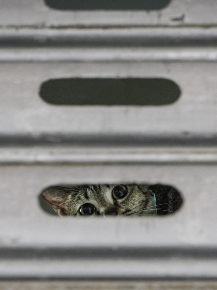shop-cats-photography-marcel-heijnen-hong-kong-17-5809cd78e00fa__880