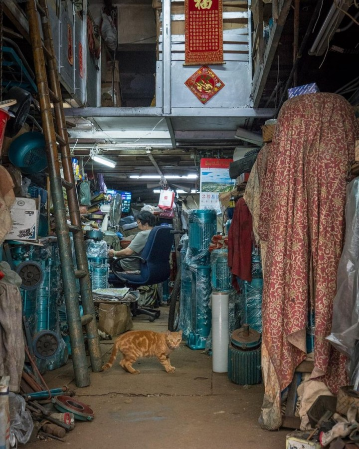 shop-cats-photography-marcel-heijnen-hong-kong-21-5809cd8527dfd__880