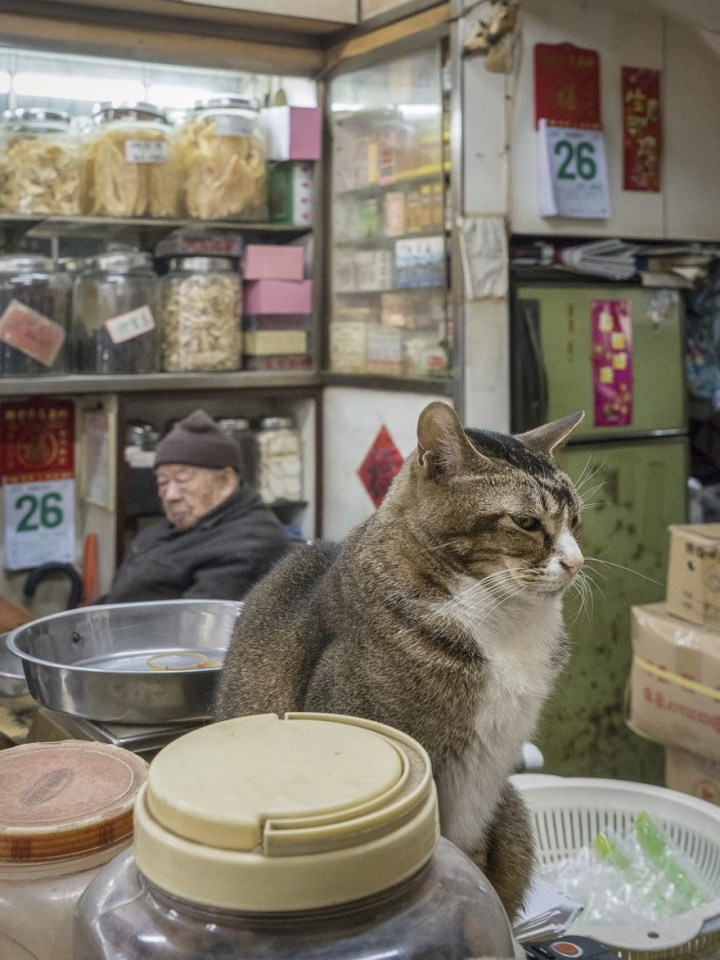 shop-cats-photography-marcel-heijnen-hong-kong-3-5809cd4c15552__880