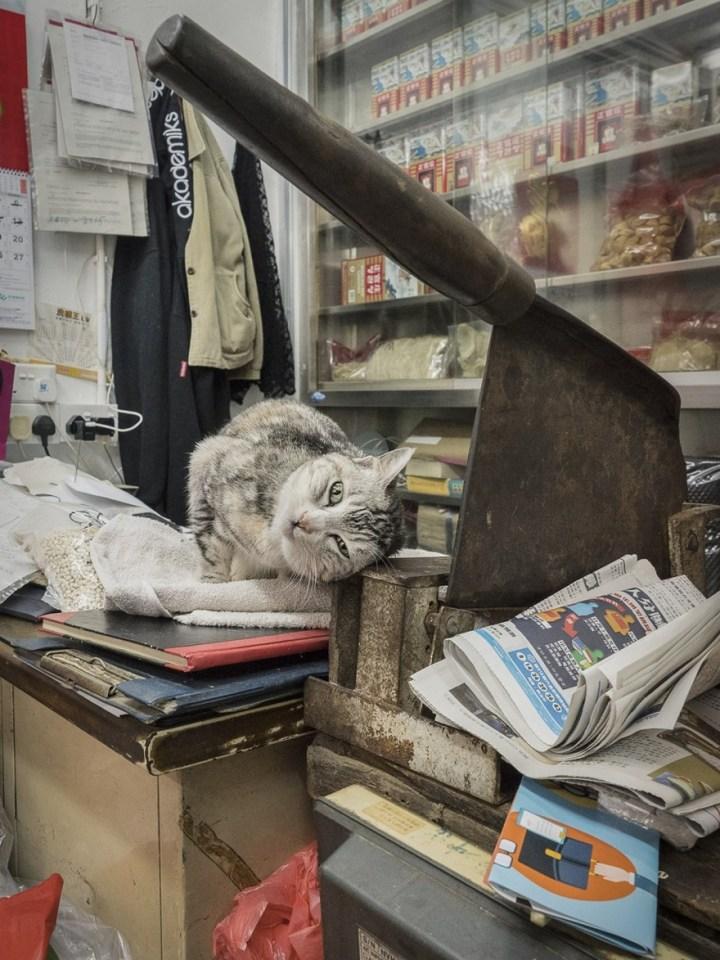 shop-cats-photography-marcel-heijnen-hong-kong-30-5809cda160c12__880