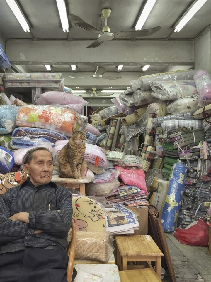 shop-cats-photography-marcel-heijnen-hong-kong-32-5809cda74b100__880