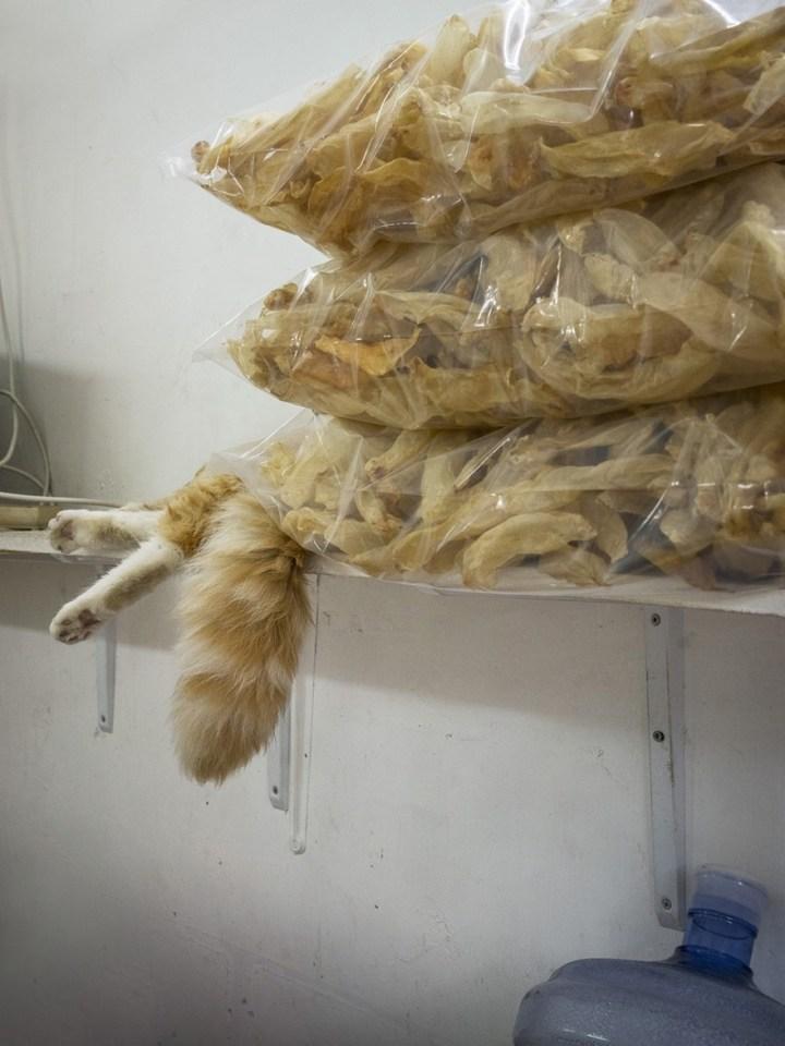 shop-cats-photography-marcel-heijnen-hong-kong-37-5809cdb805aa7__880
