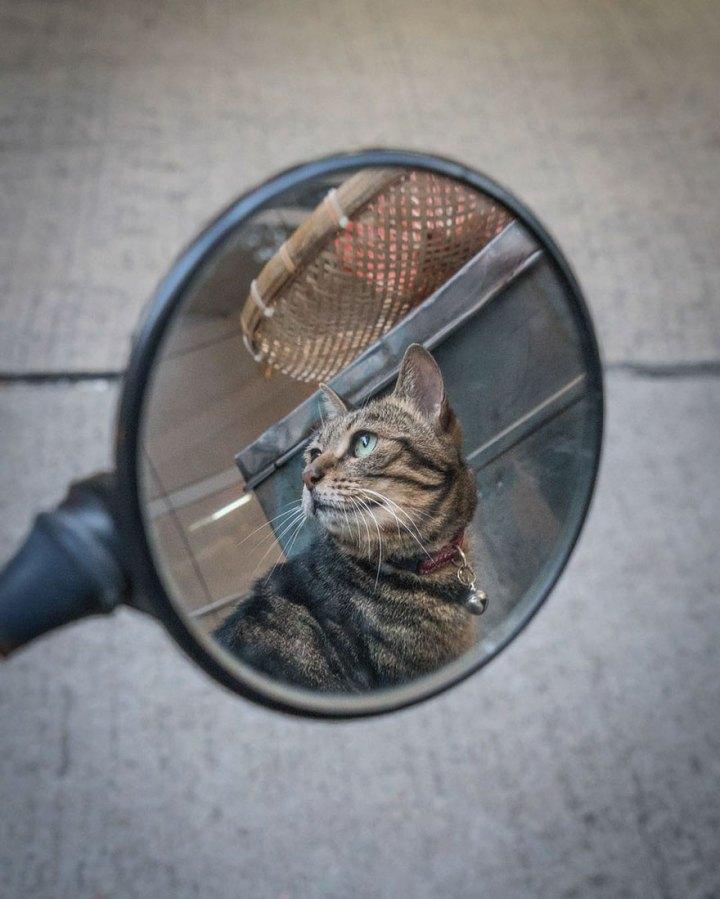 shop-cats-photography-marcel-heijnen-hong-kong-38-5809d2f60d9f9__880