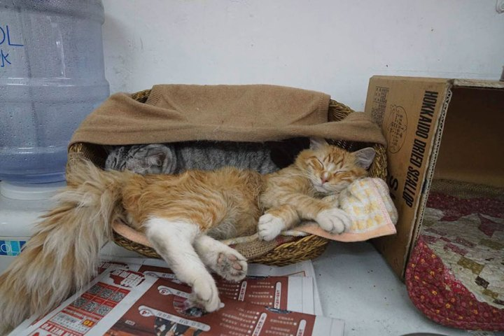 shop-cats-photography-marcel-heijnen-hong-kong-40-5809d3213f114__880