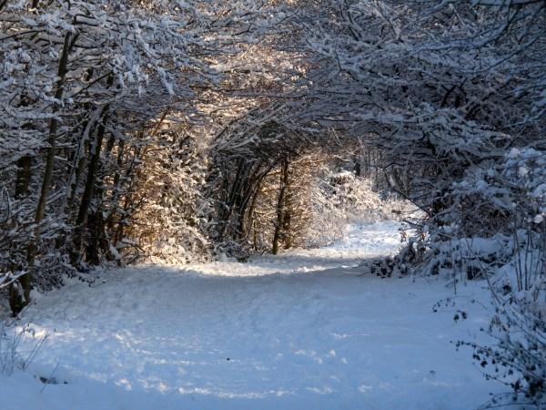 winter_path_5274594404