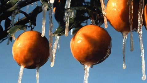 gty_frozen_oranges_thg_120103_wblog.jpg