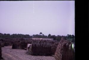 buristis in Buraima