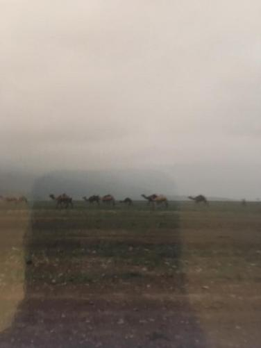 camels and mist