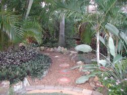 Path through the palms