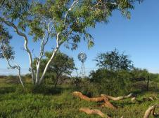 Ghost gums and windmill
