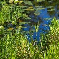 Okefenokee Swamp- Waycross, GA