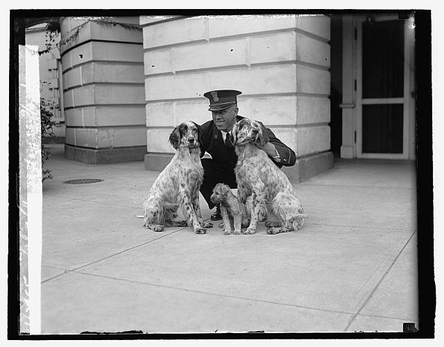 President Calvin Coolidges dogs, September 1929 (Library of Congress)