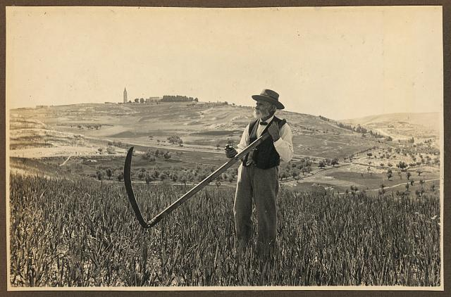 American Colony member Josef Larsson, standing in field on Mount Scopus, holding scythe, Jerusalem.  Forms part of: Visual materials from the papers of John D. Whiting (Library of Congress)