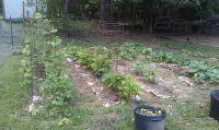Garden | Memphis Backyard Farmer