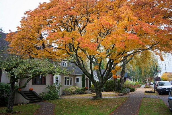 fall cleanup services memphis