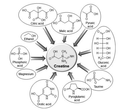 Creatine structures