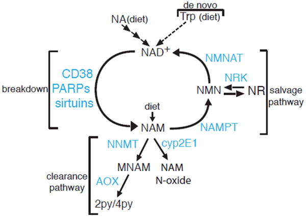 Nicotinamide N-methyltransferase: more than a vitamin B3 clearan