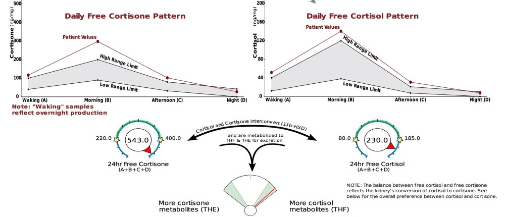 Cortisol variation3