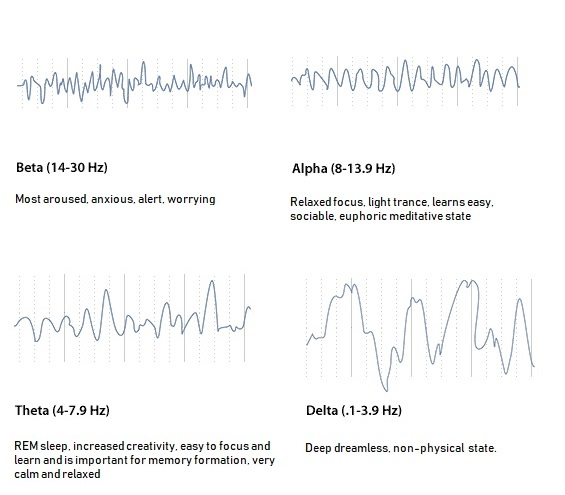 Brain waves during sleep_MenElite