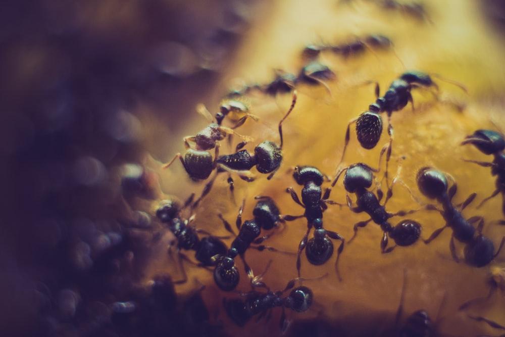 Black ants zinc aromatase MenElite