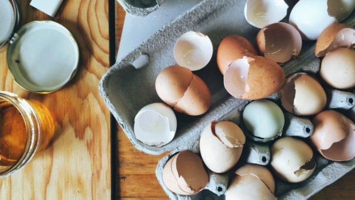 egg shell calcium joint regeneration MenElite
