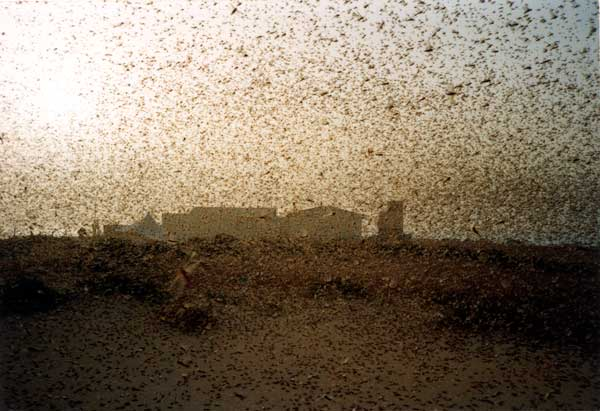 Climate change and Desert Locust