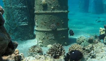 Joining forces to save Red Sea coral reefs