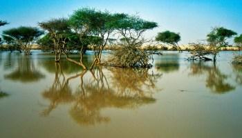 MENA coastal cities will be flooded if sea level rises