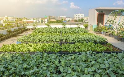Malta can truly kick-start a green revolution