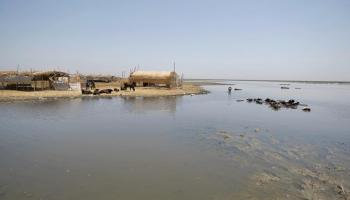 In Iraq's iconic marshlands, a quest for endangered otters