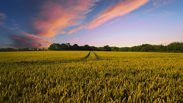 Is The UK's Organic Farming Scene In A Healthy Position?