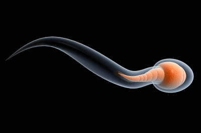 perfect sperm cell