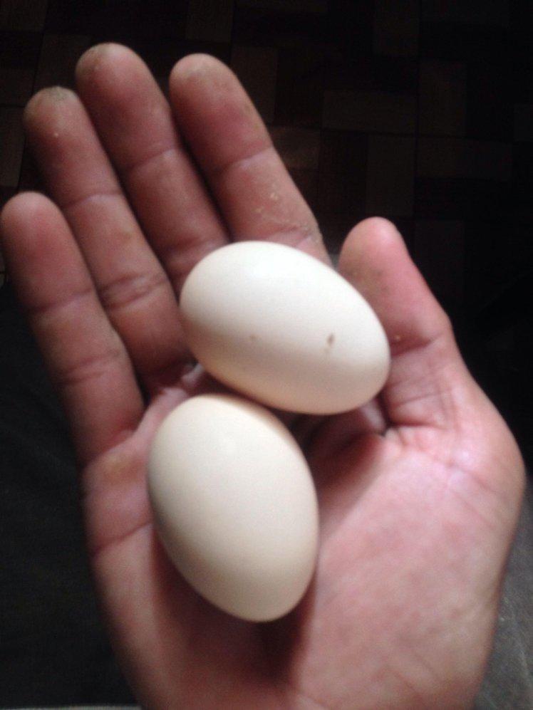 Manfaat Telur Kampung Dicampur Madu : manfaat, telur, kampung, dicampur, Manfaat, Telur, Kampung