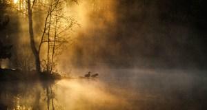 birds_forest-640
