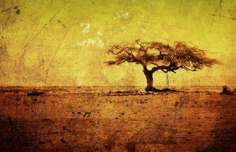drvo priroda