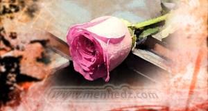 islamski brak, ruža
