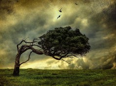 drvo, grijesi