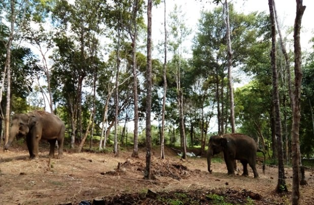 Taman Safari Lagoi