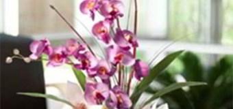 5 Jenis Tanaman Hias Ini Cocok Ditanam di dalam Rumah Kita