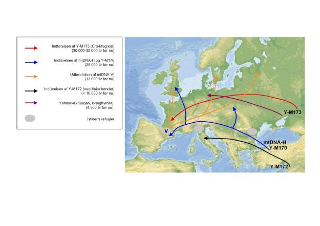 Palæolitiske og neolitiske migrationer ind i Europa. De vigtigste indvandringer til Europa i forhistorisk tid angivet med udvalgte genetiske markører i mtDNA og på Y-kromosomet. mtDNA-haplogruppen U5, der er almindelig i Nordvesteuropa, kan være den ældste genetiske markør i Europa og stamme helt tilbage til den første indvandring, der førte Aurignacien-kulturen til kontinentet for mere ned 40.000 år siden; alternativt kan den være kommet sammen med Y-173 (Cro-Magnon). De blå pile angiver en lidt senere  øvre palæolitisk indvandring end Cro-Magnon, mens de hvide pile angiver genkoloniseringen af Central- og Nordeuropa fra det iberiske refugium ved afslutningen af sidste istid (se boks 5-4). De fleste af nutidens central- og nordeuropæere er efterkommere af indbyggerne i de refugier, der blev etableret under sidste istids klimaks. Yamnaya-migrationen for 4.500 år siden er også vist.