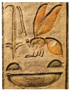 Hieroglyffer som en del af en kartouche, der angiver navnet påRamses IX (12 årh fvt.)