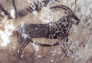 Ibex fra Salle Noir