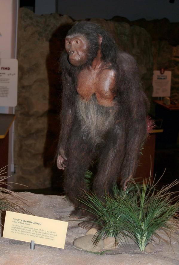 Rekonstruktion af Lucy, Museum of Man, Balboa Park, San Diego