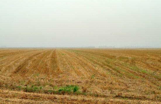 Den flade mark ved Langweiler, hvor udgravningerne i sin tid fandst sted