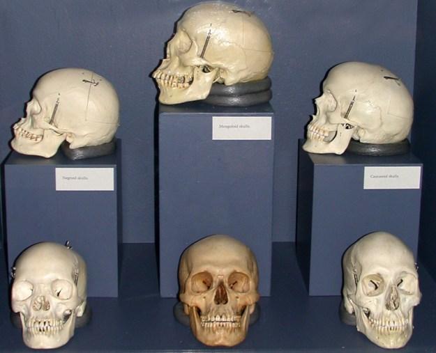 De tre traditionelle hovedracer, Museum of Man, Balboa Park, San Diego