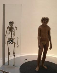 """Museet, Les Eyzies, """"Nariokotome-drengen"""" (Homo ergaster)"""