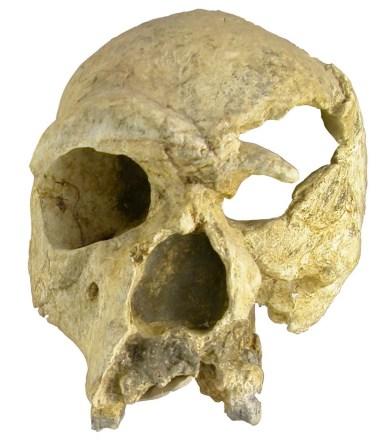 Kraniet en face