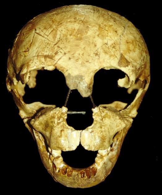 Et barnekranium (neandertal) fra Devils Tower, Gibraltar