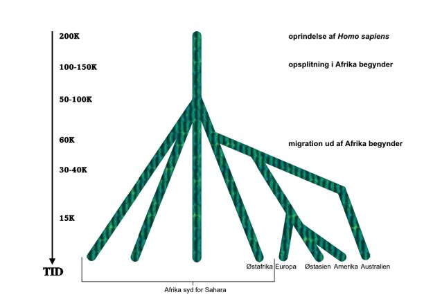 Homo sapiens' demografiske hsitorie