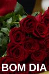 mensagem de bom dia para whatsapp com flores lindas